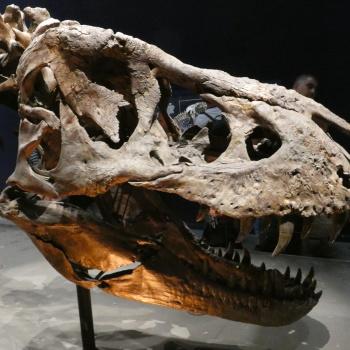 Exposition «Trix, Un T-Rex à Paris» MQmck65R_t