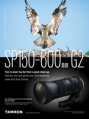 BirdWatching USA - May-June (2020)