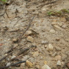 Hiking Tin Shui Wai - 頁 14 8FHUsGl8_t