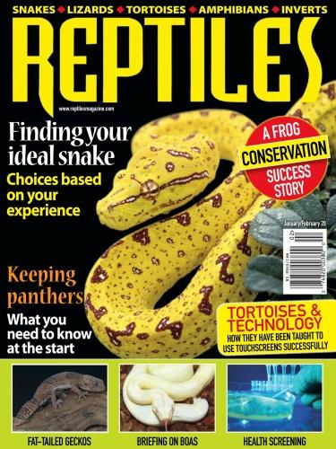 Reptiles - January-February (2020)