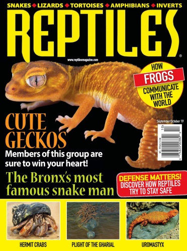 Reptiles - September-October (2019)