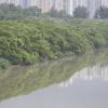 Hiking Tin Shui Wai - 頁 14 32gsx9BP_t