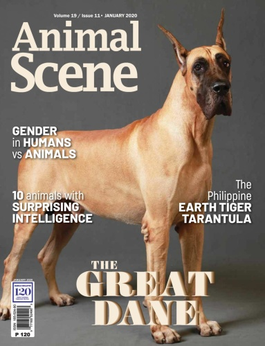 Animal Scene - January (2020)