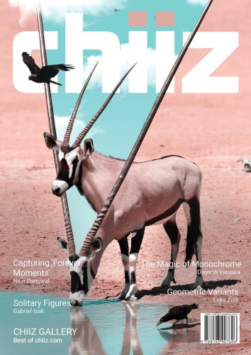 Chiiz - Volume 31 - October (2019)