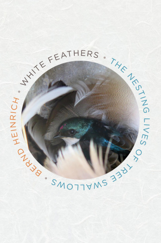 White Feathers The Nesting Lives of Tree Swallows