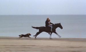 Equus 1977