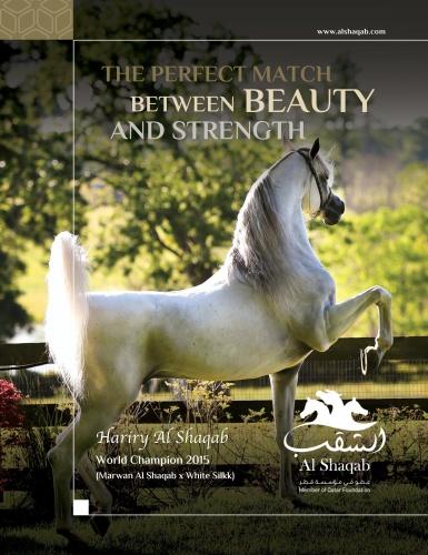 Arabian Horse World - November (2019)