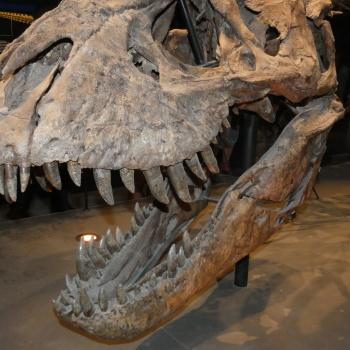 Exposition «Trix, Un T-Rex à Paris» N0HyTdcH_t