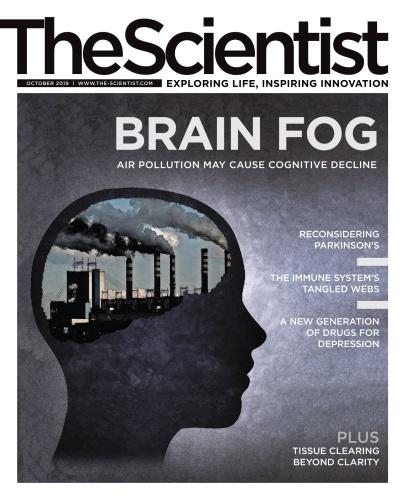 The Scientist 10 (2019)