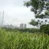 Hiking Tin Shui Wai - 頁 14 Cft1oF8R_t
