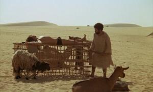 I Will Walk Like a Crazy Horse 1973