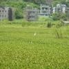 Hiking Tin Shui Wai - 頁 14 KdDSZa0v_t