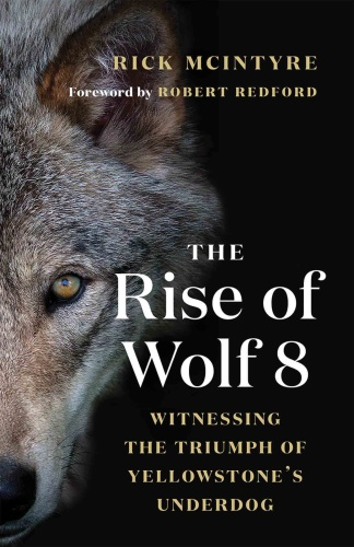 The Rise of Wolf 8 Witnessing the Triumph of Yellowstone's Underdog by Rick McIntyre