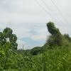 Hiking Tin Shui Wai - 頁 14 R38nVkan_t