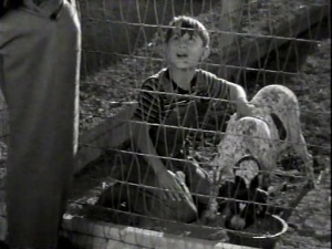 The Biscuit Eater 1940