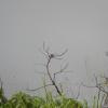 Hiking Tin Shui Wai - 頁 14 Ok246GHu_t