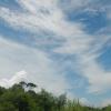 Hiking Tin Shui Wai - 頁 14 34Wvfs8N_t