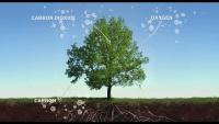 Kiss the Ground 2020 1080p NF WEB-DL DD 5.1 H.264-TEPES screenshots