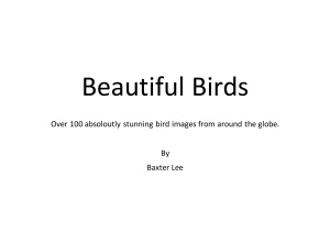 Beautiful Birds - Over 100 Absolutely