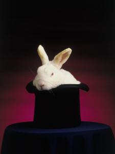 Rabbit Tricks - C E  Murphy