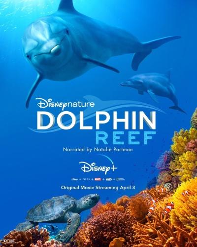 Dolphin Reef 2020 720p WEBRip 800MB x264-GalaxyRG