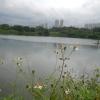 Hiking Tin Shui Wai - 頁 14 K2Z8WsaY_t