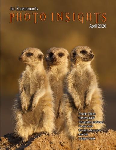 Photo Insights - April (2020)