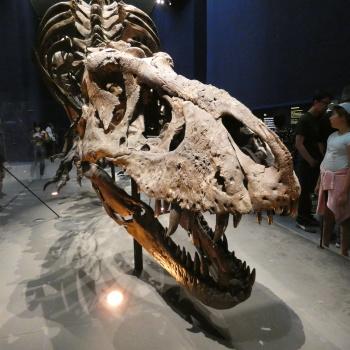 Exposition «Trix, Un T-Rex à Paris» X5AyJCJs_t