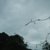 Hiking Tin Shui Wai - 頁 14 WwKjId3U_t
