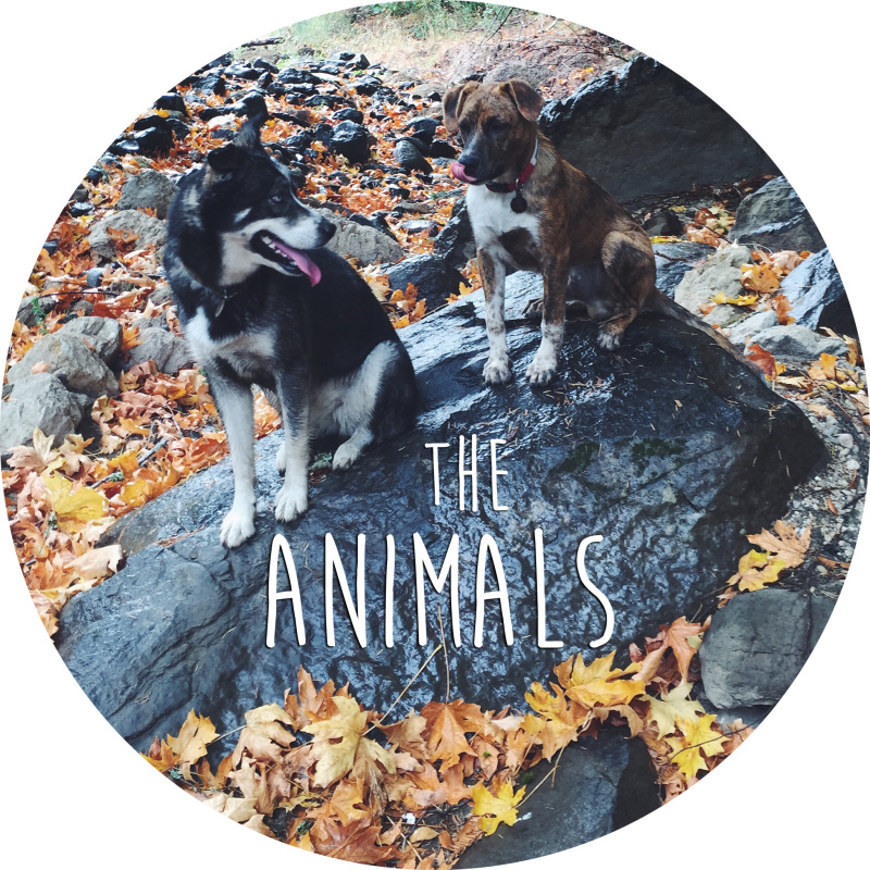 About the Animals