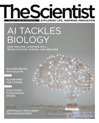 The Scientist 05 (2019)