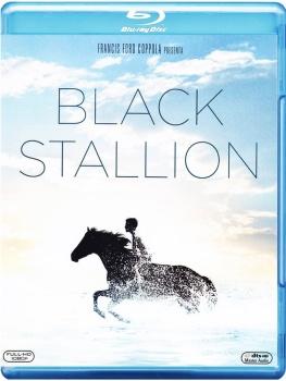 Black Stallion (1979) Full Blu-Ray 36Gb AVC ITA ENG GER SPA FRE DTS-HD MA 1.0