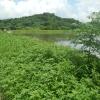 Hiking Tin Shui Wai - 頁 14 OQDTR6Uz_t