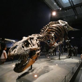 Exposition «Trix, Un T-Rex à Paris» Hwvxw7p1_t