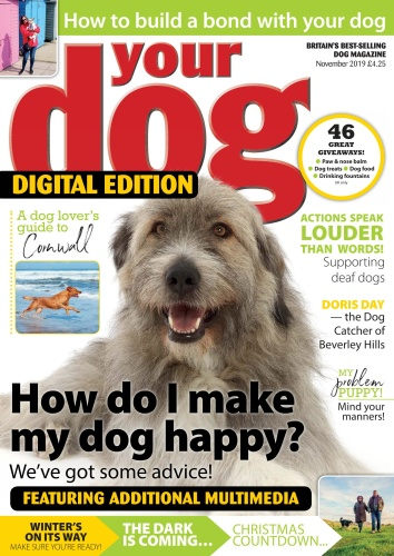 Your Dog - November (2019)